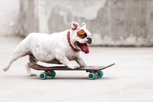 dog-on-concrete